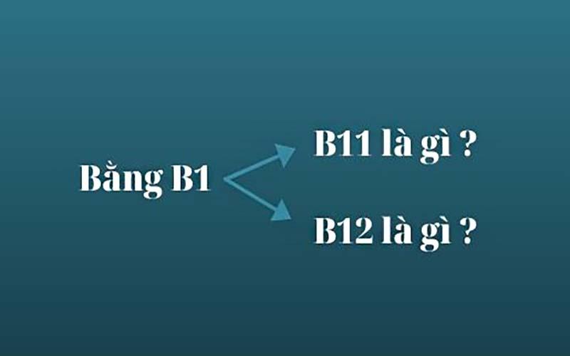 Vì sao bằng B1 được chia làm hai loại khác nhau?